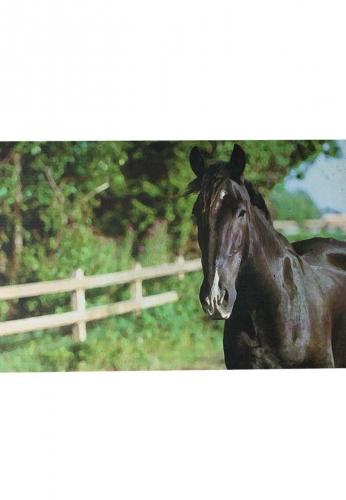 Esschert Design Fußmatte Pferd styled by Esschert .... der Hit für Ihren Eingang außen und innen
